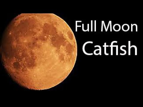 Does A FULL MOON Affect The Fish Bite?