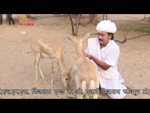 राजस्थानी सुपरहिट सांग ॥ विशनोई लगे फूटरो ॥ Latest Marwadi Dj Rajasthani Song 2017