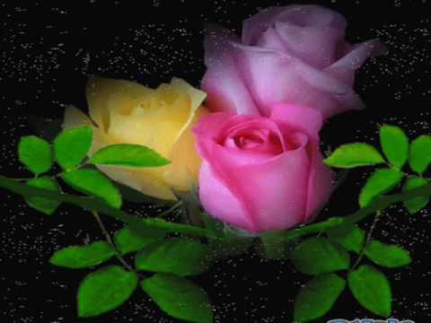 Mandra floare trandafir.