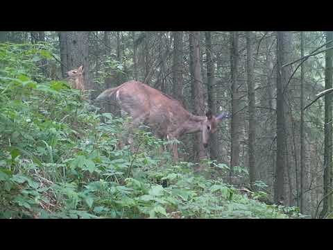 What Did My Trail Cam Capture During The Summer?