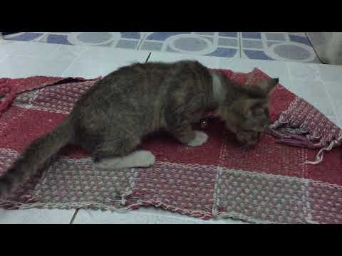 My little kitten plays with the red mat - Funny cute cat pet compilation video 2018