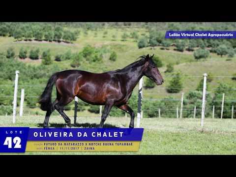 LOTE 42 - Oliveira da Chalet