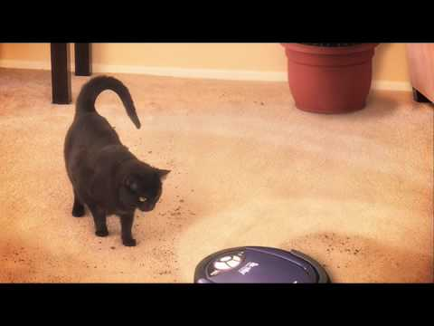 Cat Riding On Roomba Hits Dog