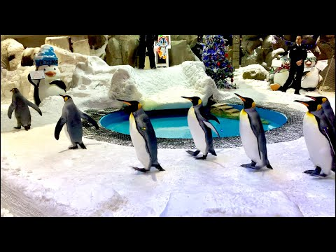 Ski Dubai || Mall Of The Emirates || Snow Park || Dubai Travel || Penguins