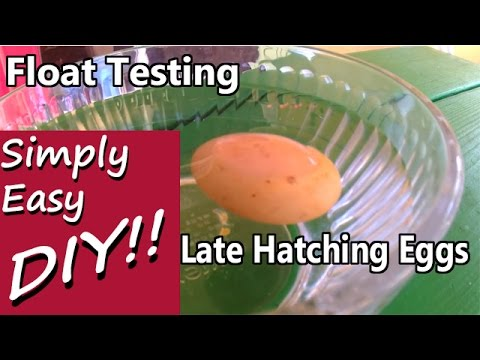 late-overdue-hatching:-float-testing-egg-viability