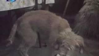 Video Куче в чекмедже II download MP3, 3GP, MP4, WEBM, AVI, FLV November 2017
