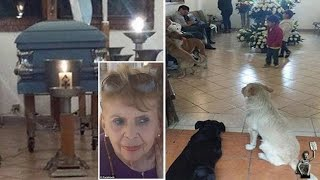 Stray dogs in Mexico turn up at the funeral of the woman who fed them