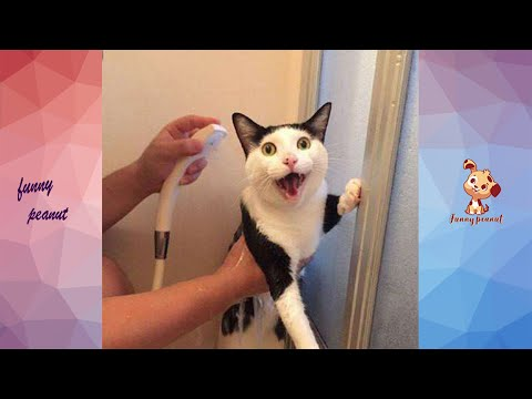 Cat's Reaction To BathingWhy Cats Hate To Bathe? | Funny Pets