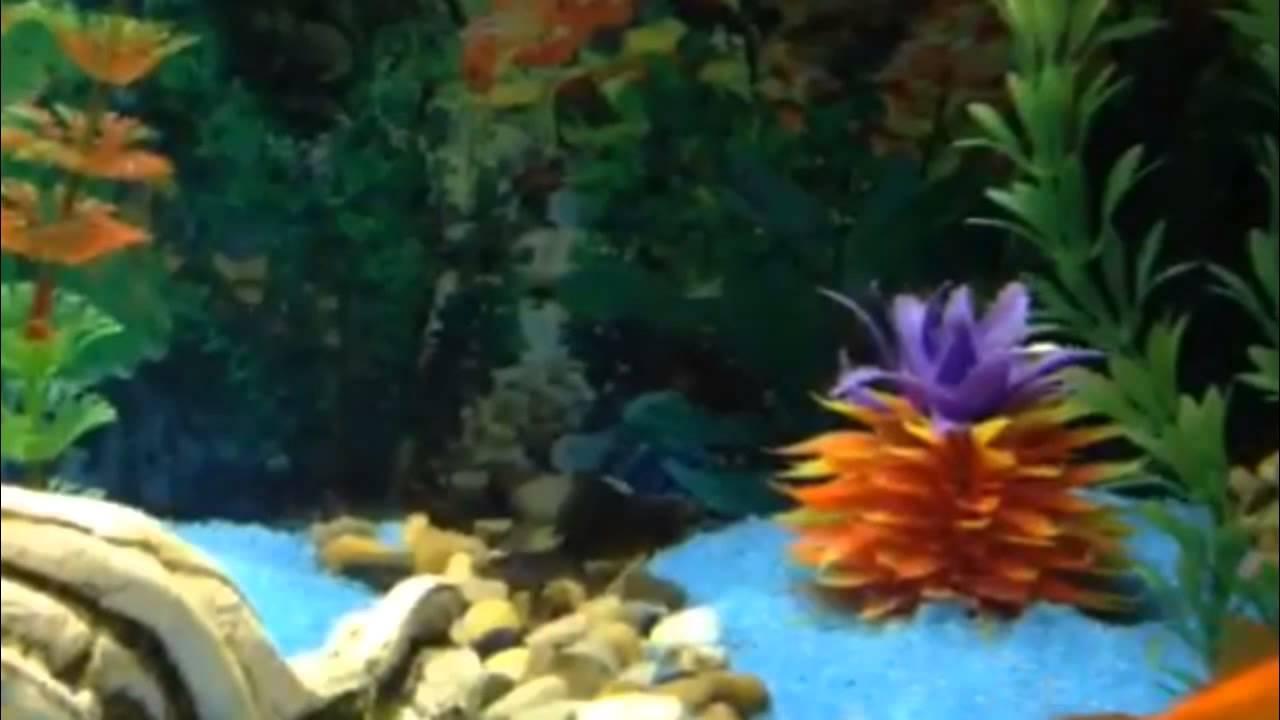 Il mio acquario di pesci rossi 90 litri acqua dolce fredda for Pesci acqua dolce