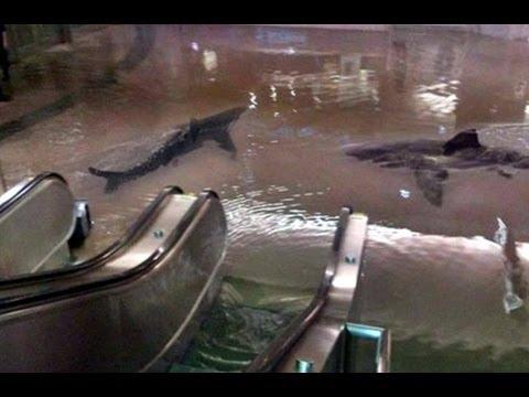 Huracán Sandy arrastra tiburones