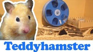 Gehege einrichten für Teddyhamster ♥
