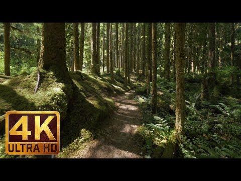 4K Virtual Forest Walk along Middle Fork Trail at Snoqualmie