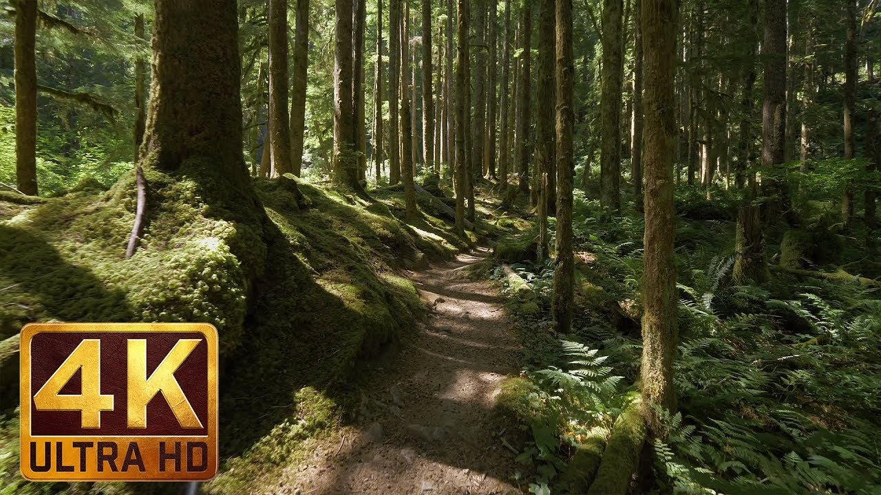 4K Virtual Forest Walk along Middle Fork Trail at Snoqualmie region. Part 1- 3 HR Relax Music