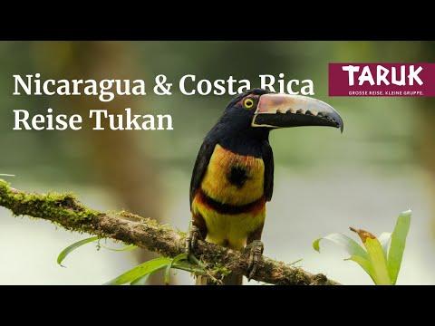 Tukan - TARUK Reise Costa Rica Und Nicaragua
