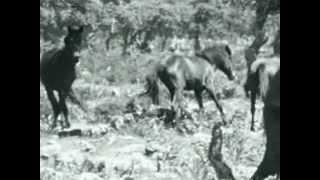 Video - Il bosco dei cavalli selvaggi