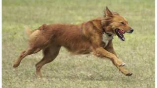 What Is A Mutt? | Dog Breeds