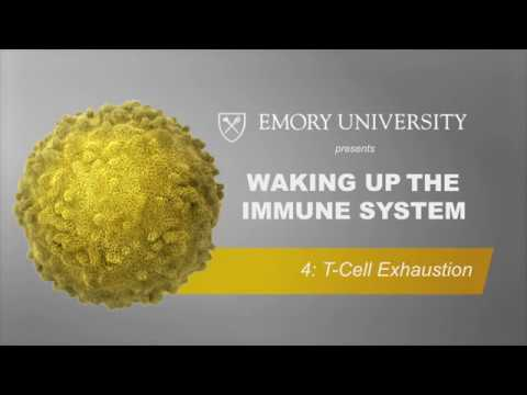 Waking Up the Immune System: T-Cell Exhaustion