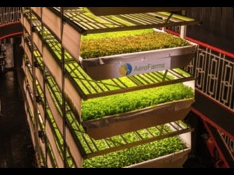 (AeroFarms) the world's biggest vertical farm