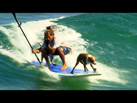 Dogs Paddleboard with Owner