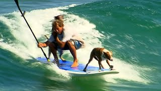Dogs Paddleboard with Owner in Ocean