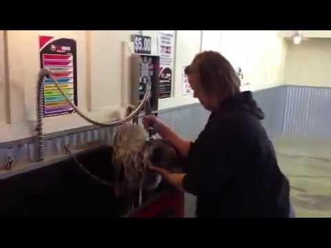 Auto mutt dog car wash self serve dog wash kalispell montanav auto mutt dog car wash self serve dog wash kalispell montanav solutioingenieria Choice Image