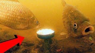 КАРАСЬ любит ГЕРКУЛЕС овсяные хлопья!!! Подводная съемка