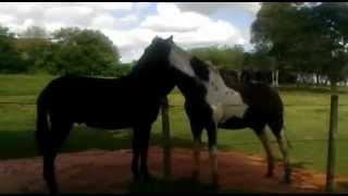 Repeat youtube video Burro e cavalo na camaradagem