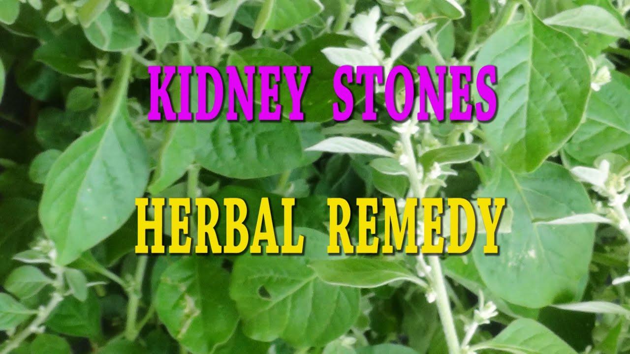 KIDNEY STONES - URINARY CALCULI-HERBAL REMEDY
