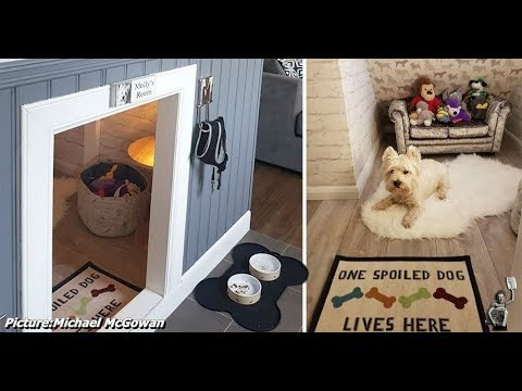 Guy Builds His Dog A Room Under The Stairs To Make Her Feel As Important As  His New Baby
