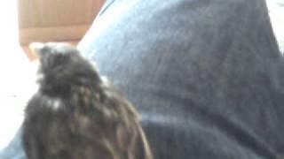 Wild Baby Sparrow