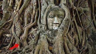 Chuyện lạ: Những cây cổ thụ BÍ HIỂM nhất thế giới