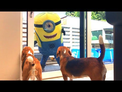 🍌🤓GIANT MINION Vs DOGS PRANK 🍌🤓 Funny Dogs Louie and Marie