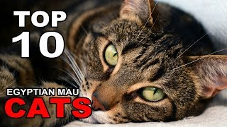 TOP 10 EGYPTIAN MAU CATS BREEDS