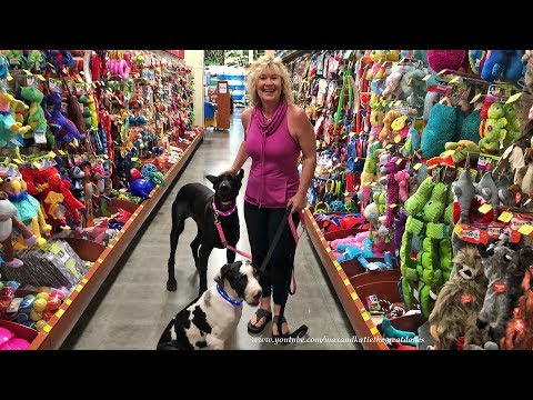 Happy Great Dane and Puppy Check Out Toys at Dog Friendly Pet Store