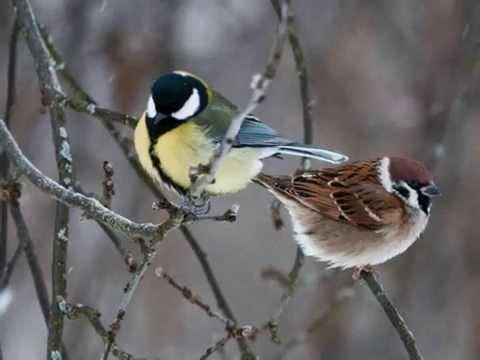 познакомились зимои стихи