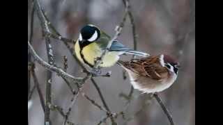 Покормите птиц зимой(, 2014-04-08T15:43:22.000Z)