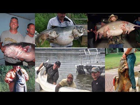 Top 10 Biggest Freshwater Fish In North America