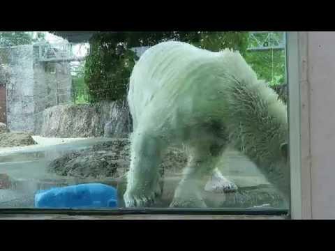 #7 Oct 2016 Pororo at Tokishima zoo, Tokushima, Japan