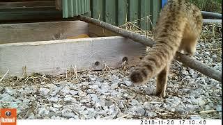 В Приморье после реабилитации выпустили на волю котенка-подкидыша. 2