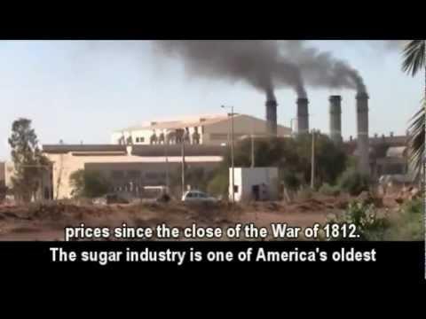 Der große Zuckerbetrug