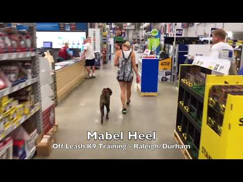"""2.5yo Boxer """"Mabel"""" Before and After - Raleigh Durham Dog Training"""