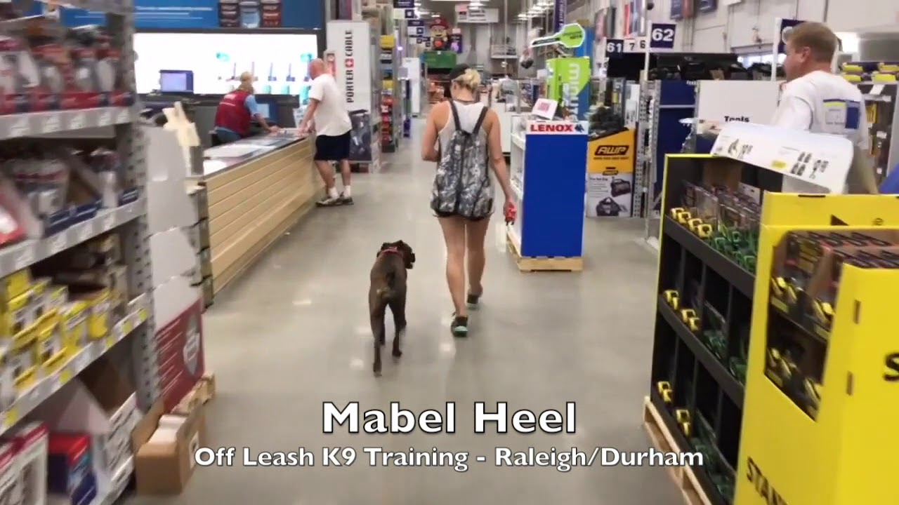 """2 5yo Boxer """"Mabel"""" Before and After - Raleigh Durham Dog Training"""
