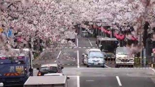 まもなく見納め!中野通りを交差する西武新宿線