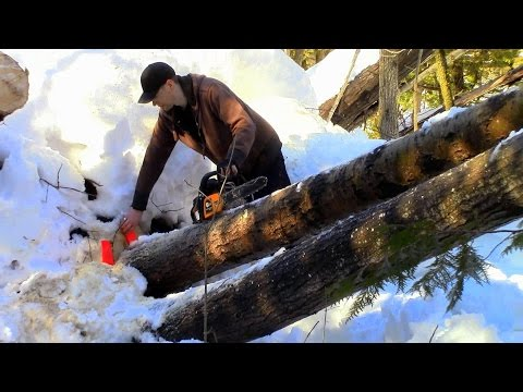 Timber! Felling Trees for our Sawmill- Log Cabin Update- Ep 9.1