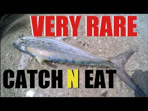 Extremely Rare Spanish Mackerel Catch And Eat