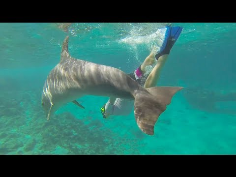 Our dolphin snorkel (free dive) at Dolphin Academy Curacao (2014 -  Eni & Laci)