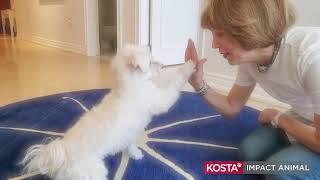 Une journée avec Kosta