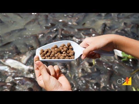 Clique e veja o vídeo Curso a Distância Nutrição e Alimentação de Peixes