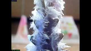 Publication Date: 2015-01-22 | Video Title: 紙樹開花_鳳溪廖潤琛紀念學校_縮時攝影專題研習比賽2015