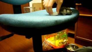 ターン、ペットボトルのキャップに足を乗せる 輪ゴムをくぐる 指でひっ...